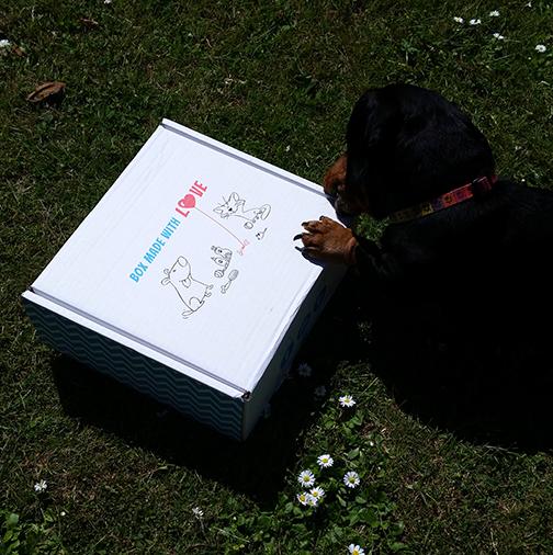 Pawsome Box