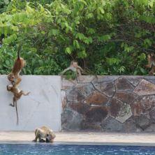 Just random monkeyage