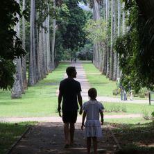 The Palm Colonnade at Peridenaya