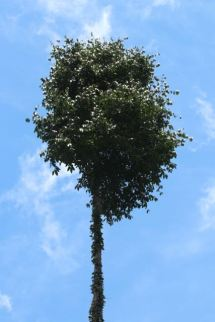 Top 10th of the Trufula Tree
