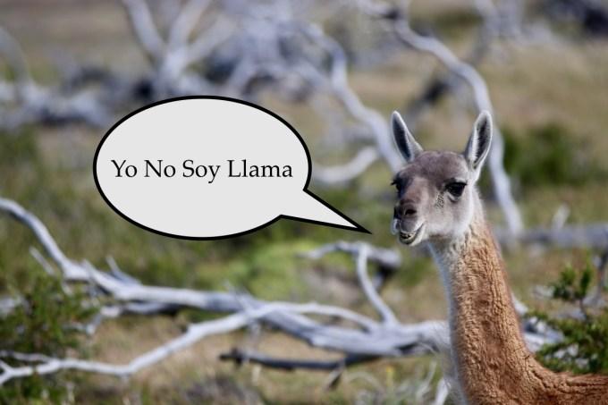 Llama Edit