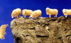 sheep-cliff