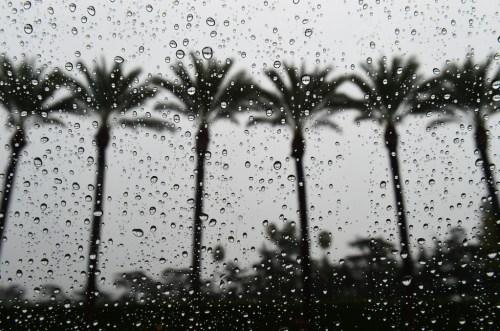 rain palms