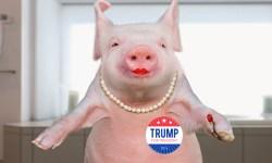 Lipstick Pig Trump