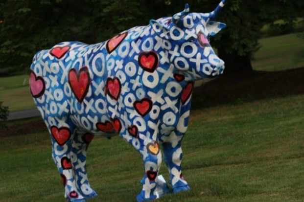 The oxen will be auctioned off in October. Photo: Jeanne Imbrigiotta.