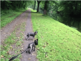 dogs on towpath