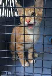 Kitten_found_on