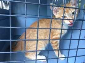 Kitten_found_on_stuart_rd