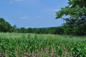 Somerset County closed on 4.5 acres this week that will be added to the Sourland Mountain Preserve. Photo by Lisa MacCollum, NJ Conservation Foundation.