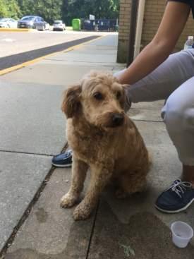 dog-found-at-lb