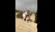 Camel With A Weight Limit: Oh You 300lbs?! Well Then Ain't No Ride Bih…