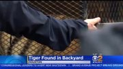 Well Damn: Pot Smoker Enters Abandoned House To Get High & Ends Up Finding A Tiger In The Backyard!
