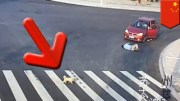Jaywalker Gets Hit By A Car and Then A Puppy Demonstrates How To Use A Crosswalk!