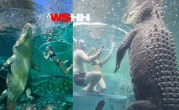 CAGE OF DEATH – Australian Tourist Attraction Swimming With Crocodiles
