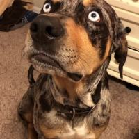 Dog Gets Mad At Owner For Telling An Unfavorable Story About Him!