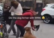 Woman Gets RKO'd By Her Own Dog During A Fight!