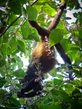 Photo Travel: Nicaragua - Finca Magdalena on Ometepe Island