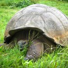 Galapagos Travel Tips: Turtle