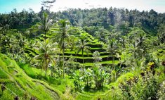 indonesia-2-ubud-75