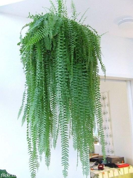 rośliny w sypialni