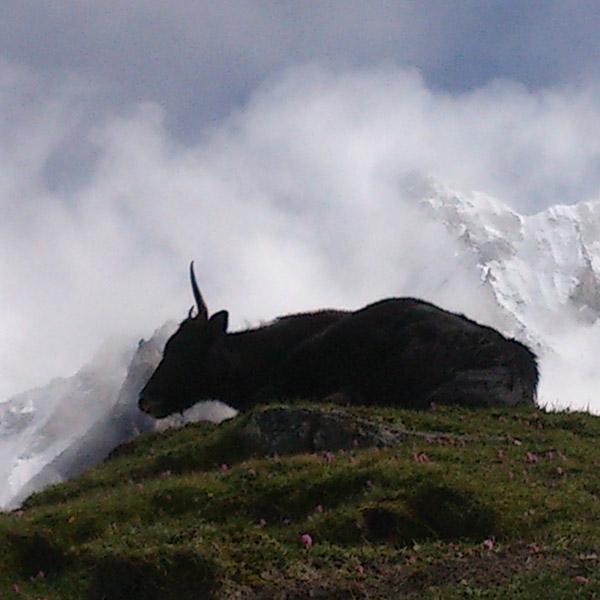 QUAD_DSC_1007 kyangjin yak i muntanyes