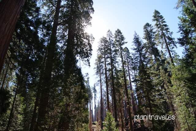 Que ver en Yosemite National Park 1