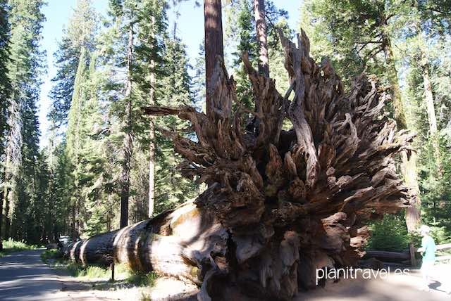 Que ver en Yosemite National Park