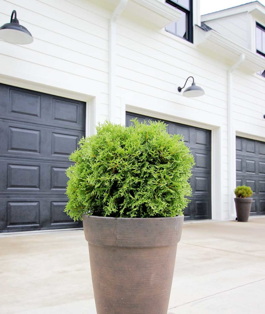 8 best shrubs and trees for containers