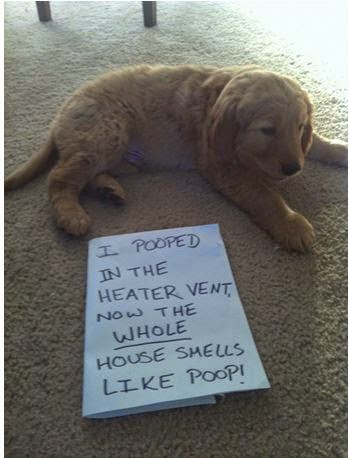 Puppy pooped in heating vent.