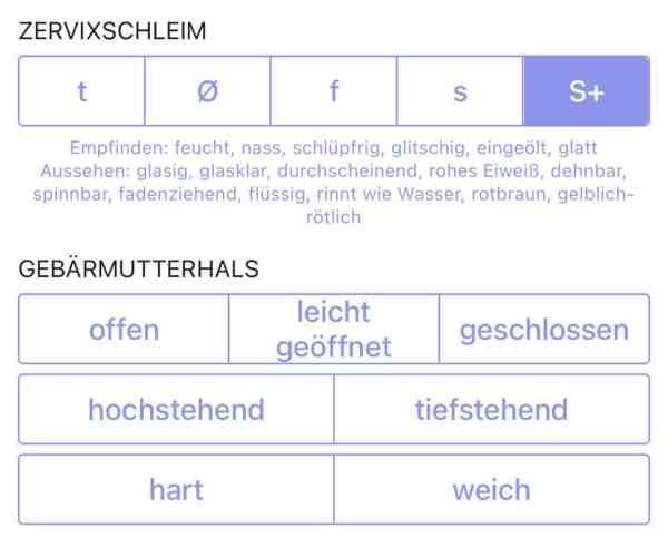 trackle, Gebärmutterhals, Zervixschleim, planningmathilda