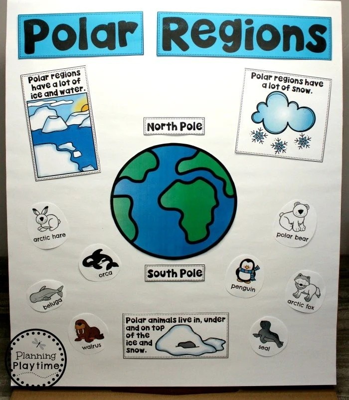 Arctic Animals Anchor Chart #arcticanimals #preschoolactivities #planningplaytime #anchorchart
