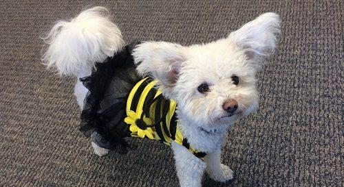 Smallbiz Dog