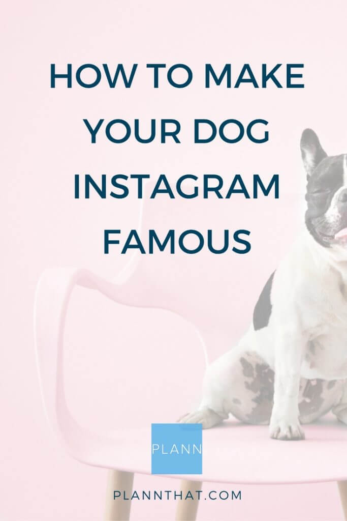 how to make your dog famous on instagram pinterest