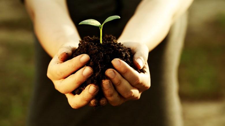 Arbor Day tree plant