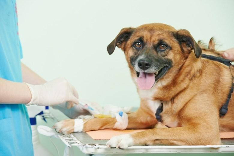 dog puppy vet test blood