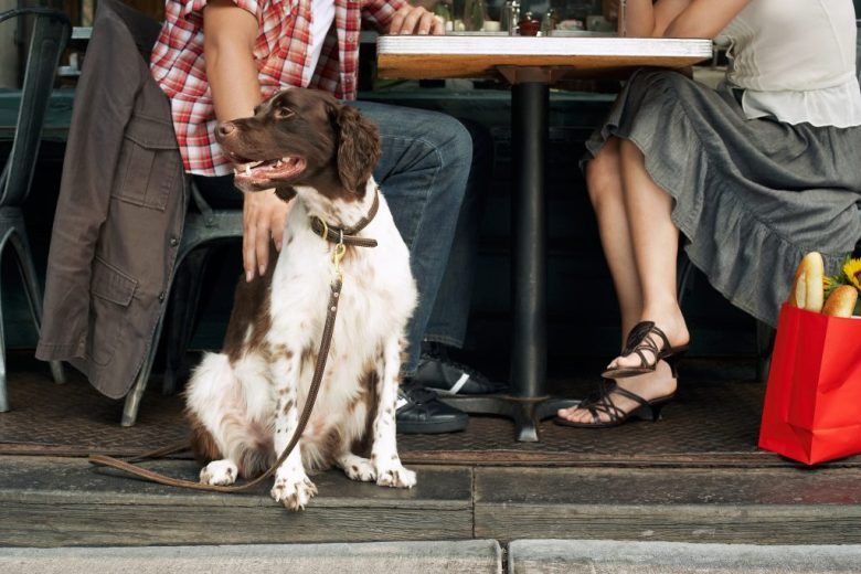 Dog friendly lazy dog restaurant