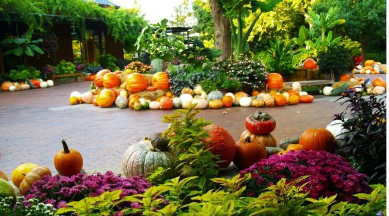 Autumn at the Arboretum Dallas pumpkins
