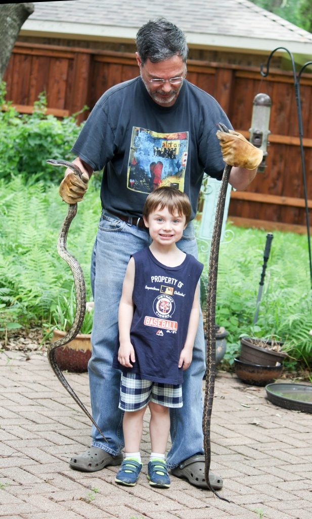 Rat snake, wildlife, Texas, Texas rat snake