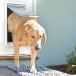 Installing a Pet Door