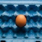 egg in one basket