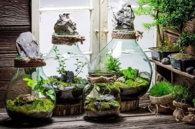 PlantenTerrarium