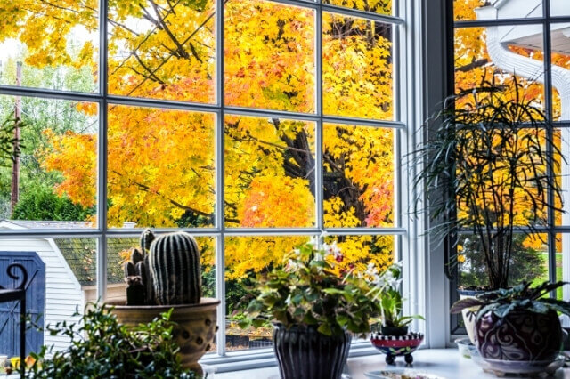 Plantada Blog Kamerplanten Herfst