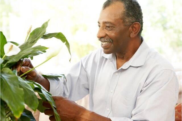 Kamerplanten verlagen stress