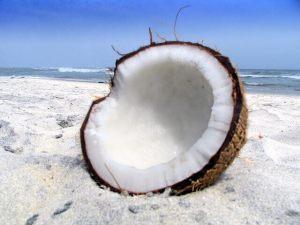 kókusz termés