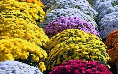 Virágzó szobanövények télen – őszi-téli cserepesek