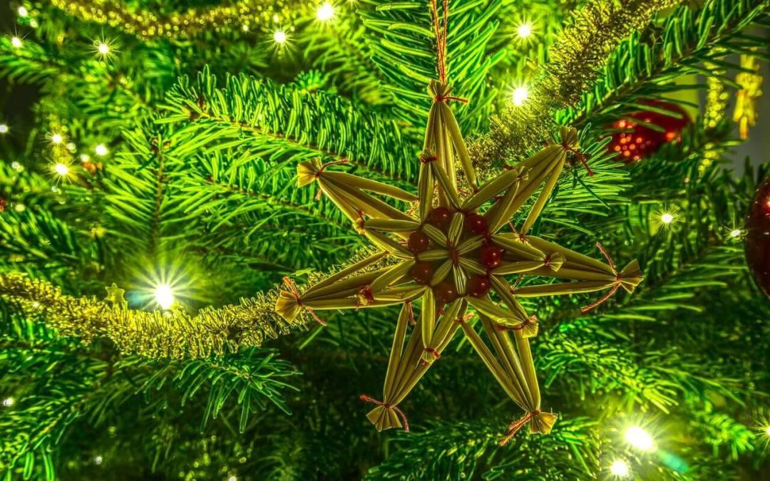 Vágott fenyő fajok – Karácsonyfa 4.7 (3)