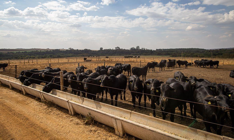 Abate de bovinos tem queda de 8,5%, anuncia o IBGE