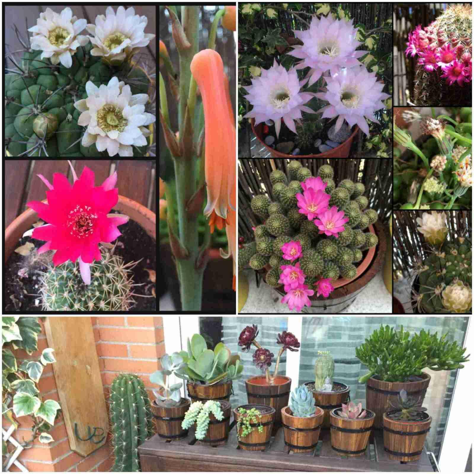 Coleccion de cactus por Conchita Esteban 2