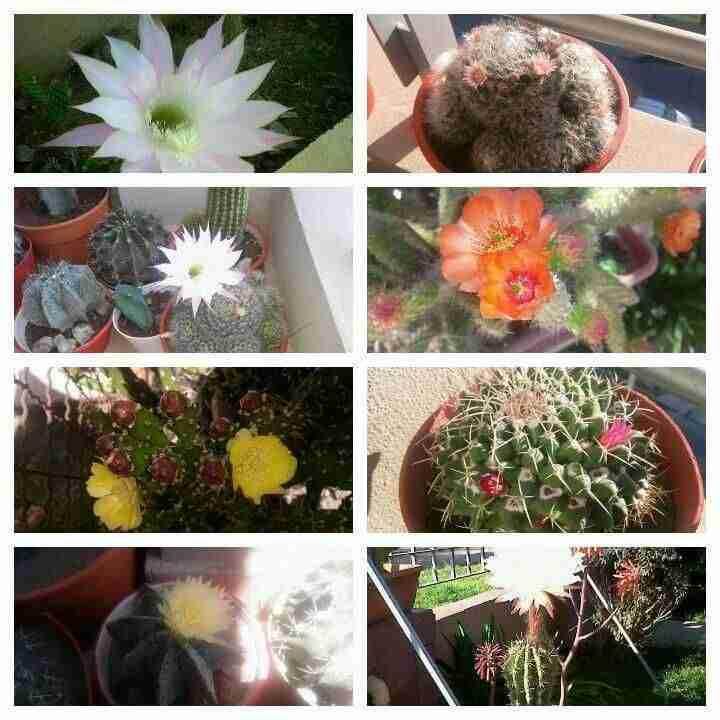 Colección preciosa de cactus
