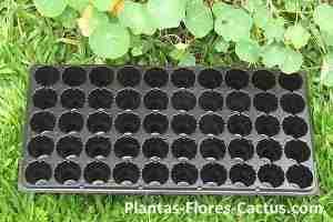bandeja reproducción cactus